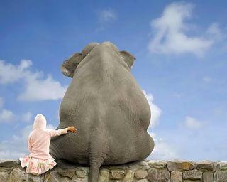 Обои на телефон слон, забавные, друзья, elephant buddy