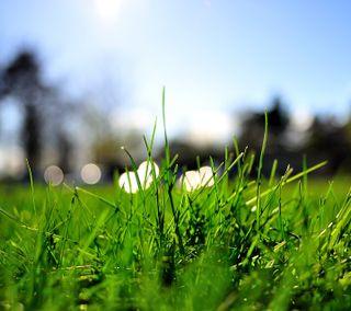 Обои на телефон трава, зеленые