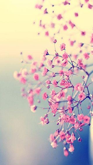 Обои на телефон цветы, природа