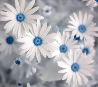 Обои на телефон природа, синие, крутые, приятные, цветы, классные, лето, ок