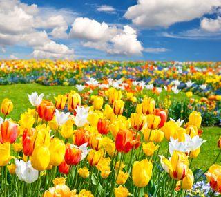 Обои на телефон поле, цветы