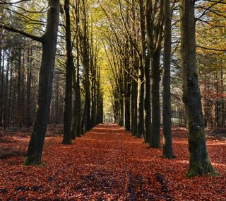 Обои на телефон осень, оранжевые, на улице, autumn 8