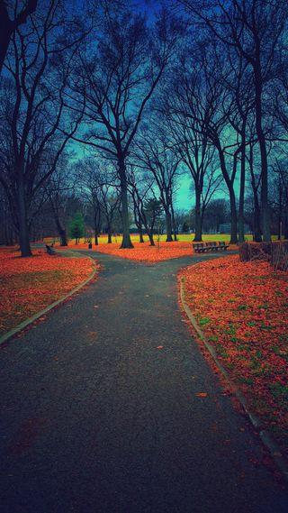 Обои на телефон парк, цветные, трава, природа, осень, листья, дорога, деревья, split, pathway, fork in the road