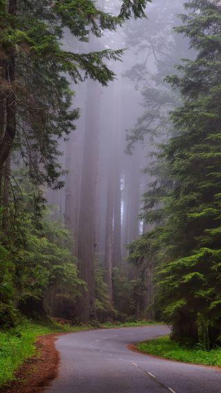 Обои на телефон дорога, redwoods