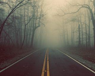 Обои на телефон джунгли, туман, страшные, путь, природа, дорога, tress, hd