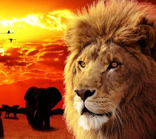 Обои на телефон brids, закат, лев, животные, тигр, пустыня, слон, силуэт, зоопарк