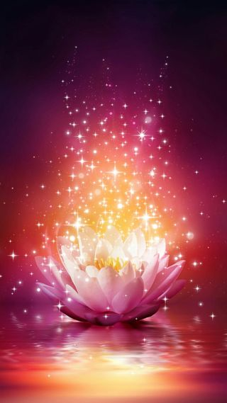 Обои на телефон отражение, цветы, сияние, розовые, природа, лотус, звезда, вода, блестящие, pink shiny lotus