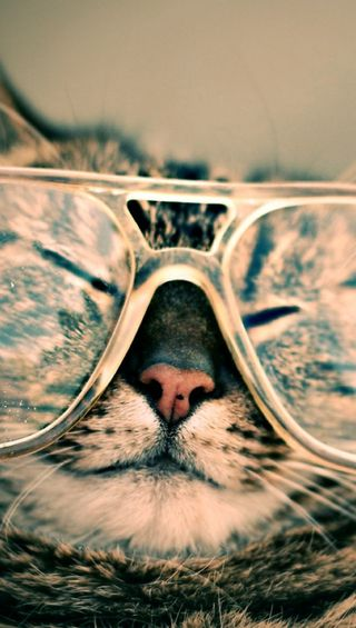 Обои на телефон очки, эпл, счастливые, питомцы, милые, крутые, кошки, забавные, животные, happy, apple