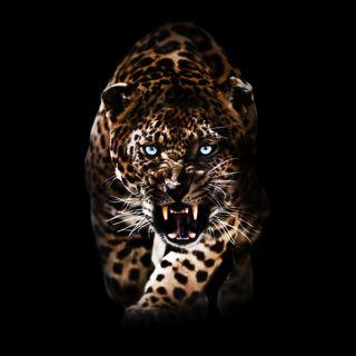 Обои на телефон леопард, коты