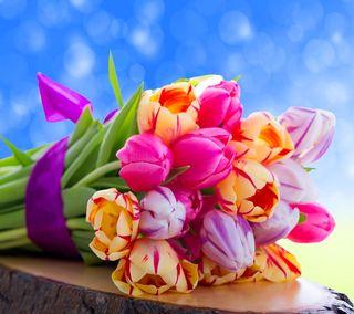 Обои на телефон тюльпаны, цветы, красочные