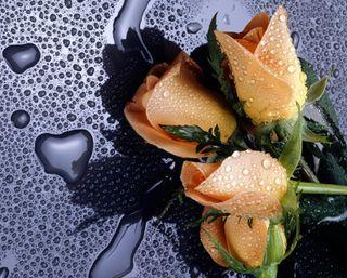 Обои на телефон капли дождя, цветы, сердце, розы, мокрые, любовь, дождь, вода, валентинка, love