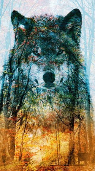 Обои на телефон желтые, дерево, волк