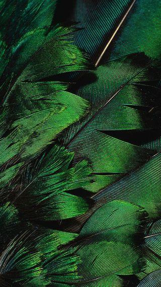 Обои на телефон перья, птицы, перо, зеленые