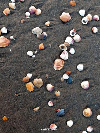 Обои на телефон seashell, summertime, swim, море, пляж, океан, солнце, лето, песок, солнечный свет, морской берег