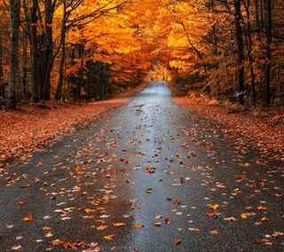 Обои на телефон улица, симпатичные, сезон, осень, мокрые, листья, дорога, fall season