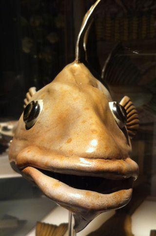 Обои на телефон губы, рыба, глаза, maritime, big eye