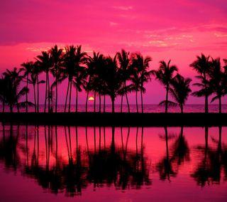 Обои на телефон пальмы, солнце, пляж, океан, линии, закат, дерево, palm line