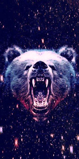 Обои на телефон медведь, kodiak