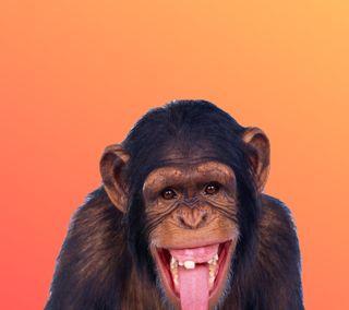 Обои на телефон сумасшедшие, экран, обезьяны, новый, крутые, забавные, животные, дом, айфон, laughing, iphone, crazy monkey hd, 2017