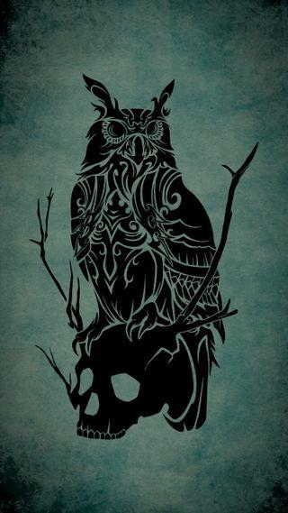 Обои на телефон птицы, череп, тату, сова, племенные, лес, животные, owl and skull