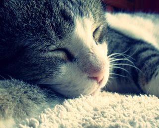 Обои на телефон сон, кошки, кошачий