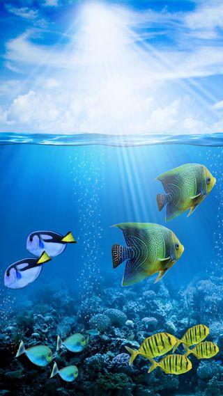 Обои на телефон подводные, тропические, солнечный свет, рыби, океан, кораллы, coral reef