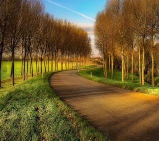 Обои на телефон путь, взгляд, приятные, прекрасные, осень, милые, path autumn