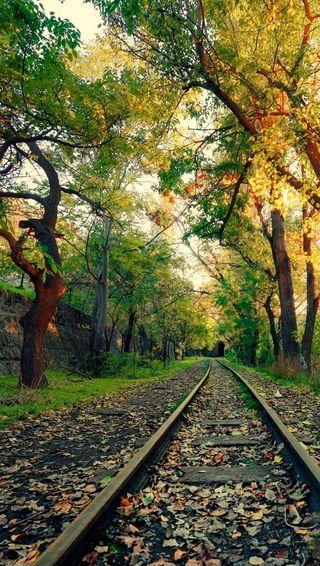 Обои на телефон train tracks, деревья, осень, поезда, пути