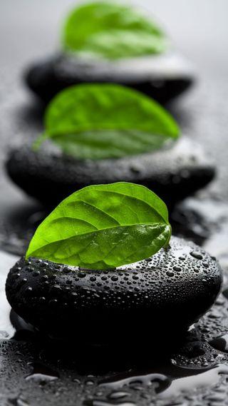 Обои на телефон спа, дзен, листья, камни, вода
