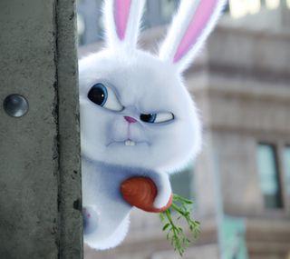 Обои на телефон conejo, mascota, tierno, животные, фан, питомцы, кролик, кролики