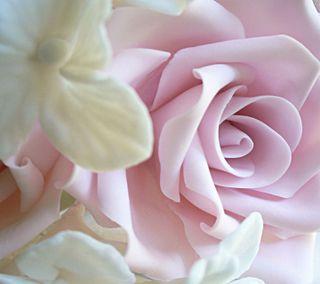 Обои на телефон мягкие, розы, розовые, soft pink rose, soft pink