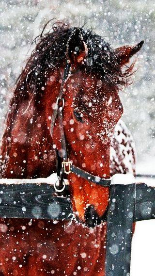 Обои на телефон лошадь, снег, зима