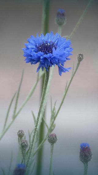 Обои на телефон туман, цветы