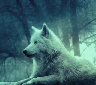 Обои на телефон эпичные, новый, лучшие, лес, загрузка, волк, белые, wallapaper