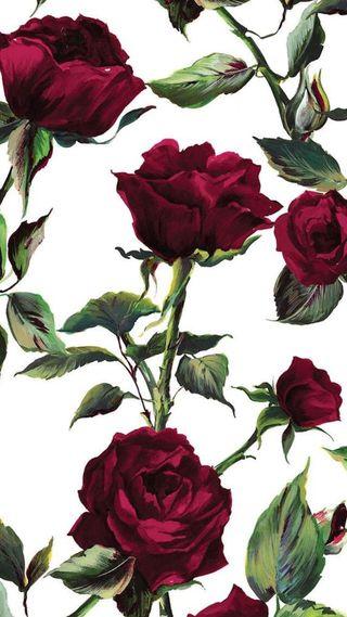 Обои на телефон розы, cy