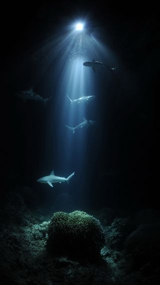 Обои на телефон рыба, под, море, вода