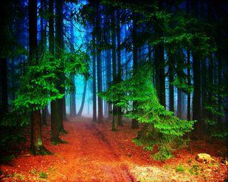 Обои на телефон сфера, джунгли, природа, лес, forest sphere