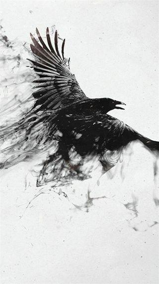 Обои на телефон орел, дикие, черные