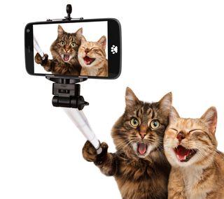 Обои на телефон любовь, лучшие, кошки, selfi, love