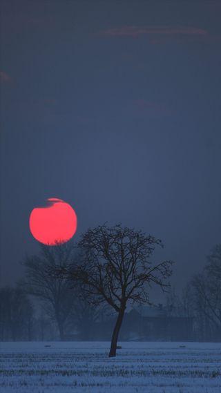 Обои на телефон туман, лес, синие, луна, красые, красочные, закат, дерево, восход