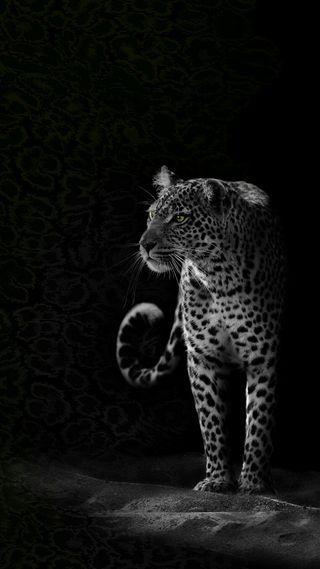 Обои на телефон леопард, черные, животные