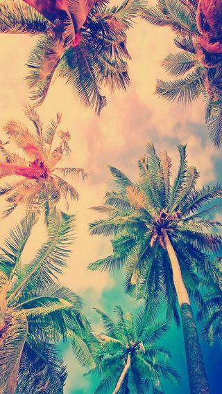 Обои на телефон пальмы, лето, лайк, дизайн, деревья, palm trees summer