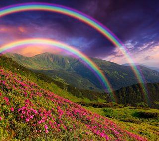 Обои на телефон растения, цветы, радуга, горы, rainbowscapes
