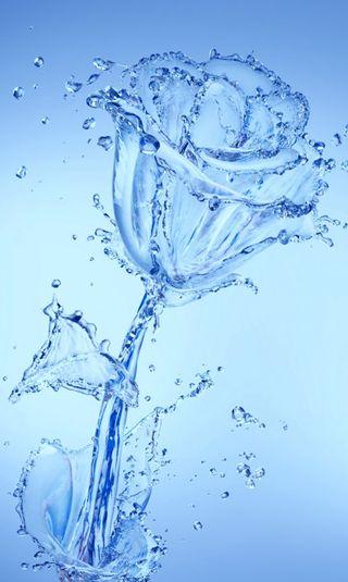 Обои на телефон синие, розы, природа, вода, hq, hd