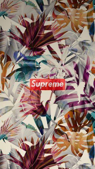 Обои на телефон тропические, supreme, 2k18