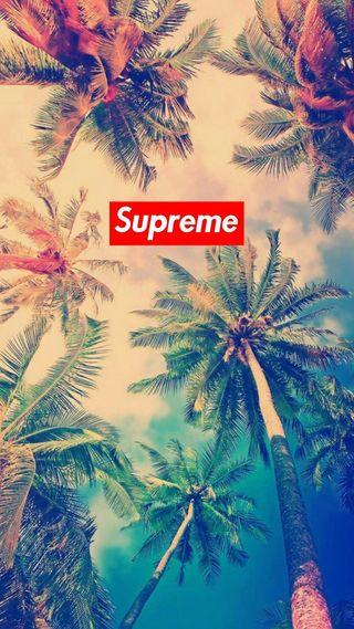 Обои на телефон пальмы, деревья, supreme
