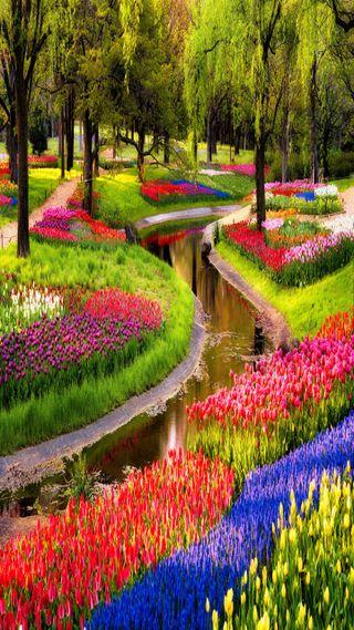 Обои на телефон сад, цветы, приятные, взгляд, flower garden