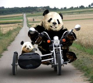 Обои на телефон медведи, новый, крутые, pandas, hd