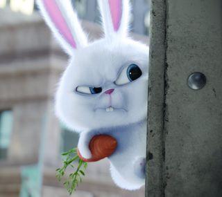 Обои на телефон the secret life of pets, милые, белые, жизнь, мультфильмы, питомцы, кролики, секрет