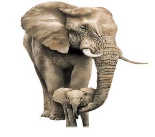 Обои на телефон слон, приятные